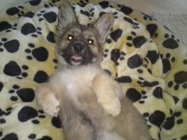 Foto 3 Möchte mein 4 Monate alten hundewelpen in liebevolle hände angeben