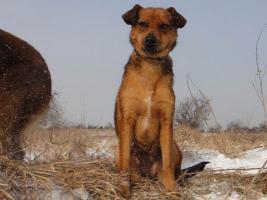 Foto 4 Mona-schüchternes Hundeherz sucht