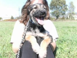 Foto 2 Mosi- zuckersüßes Hundemädchen sucht ein Zuhause fürs Leben!