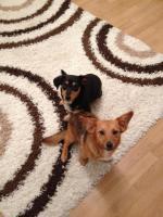 Murmel und Sally suchen ein Zuhause