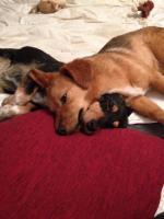 Foto 4 Murmel und Sally suchen ein Zuhause