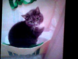 Foto 2 Muss mich schweren Herzens von meinen beiden Katzen trennen
