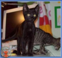 Foto 2 NOTFALL: 8 Katzenkinder brauchen dringend Fix- oder Pflegeplätze
