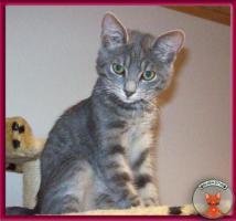 Foto 3 NOTFALL: 8 Katzenkinder brauchen dringend Fix- oder Pflegeplätze
