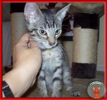 Foto 5 NOTFALL: 8 Katzenkinder brauchen dringend Fix- oder Pflegeplätze