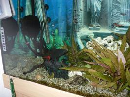 Foto 3 NOTFALL: Aquarium 200l komplett mit Zubehör
