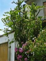 Foto 6 NUTZPFLANZEN - Apartments im Aparthotel Stella dell'est