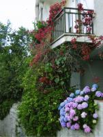 Foto 8 NUTZPFLANZEN - Apartments im Aparthotel Stella dell'est