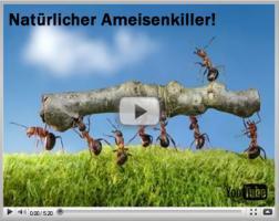 Natürlicher Ameisenvernichter!
