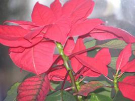 Foto 2 Neu der Frauen – Freundinnen - Tarif 1 Termin für 2 / Wellness / Massage / Kurzurlaub / als schönes Weihnachtsgeschenk