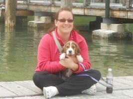 Foto 5 Neue Familienmitglied?Beagle Welpe!:-)