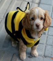 Neuer Pullover für Hunde und Katzen mit Knöpfen Kapuze Ungetragen Biene