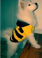 Foto 4 Neuer Pullover für Hunde und Katzen mit Knöpfen Kapuze Ungetragen Biene