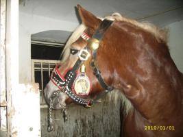 *~Neuwertiges Pferdekummet~*