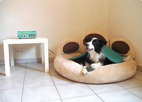 Foto 3 Ob alt ob jung, so halten Sie Ihren Hund in Schwung