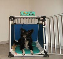 Foto 7 Ob alt ob jung, so halten Sie Ihren Hund in Schwung