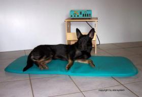 Foto 8 Ob alt ob jung, so halten Sie Ihren Hund in Schwung