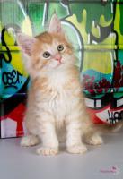 Foto 3 Oberwalls Kitten