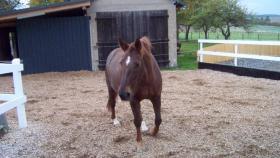 Offenstallplatz in kleinem Pferdeparadies im Hunsrück