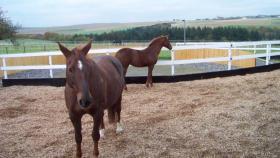 Foto 3 Offenstallplatz in kleinem Pferdeparadies im Hunsrück