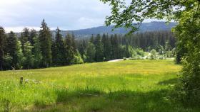 Foto 3 Ostern im Bayerischer Wald - Ferienwohnung ● 5 Personen●
