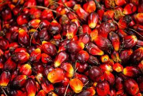 Palmöl, Sonnenblumenöl und andere