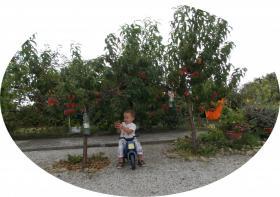 Foto 2 Pensionshaus in Österreich