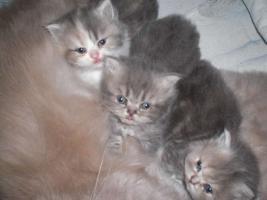 Foto 5 Perserbabys