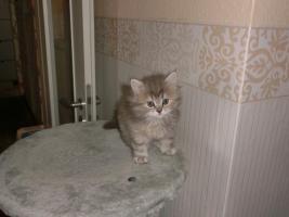 Foto 9 Perserbabys