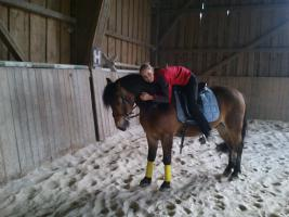 Foto 3 Pferd