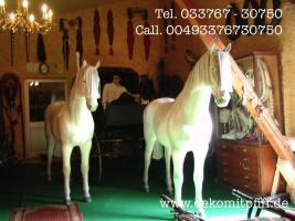 Foto 2 Pferd Bulle Kuh als Werbung ...
