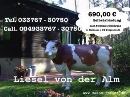 Foto 3 Pferd Bulle Kuh als Werbung ...