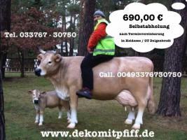 Foto 5 Pferd Bulle Kuh als Werbung ...