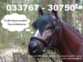 Foto 6 Pferd Bulle Kuh als Werbung ...