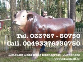 Foto 7 Pferd Bulle Kuh als Werbung ...