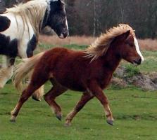 Pferde/Ponies wegen Bestandsverkleinerung abzugeben !!!!
