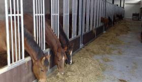 Foto 3 Pferde Stallboxen inkl. Holzfüllung und Schiebetür