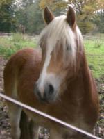 Pferde verschwunden