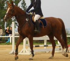 Foto 2 Pferde verschwunden