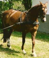 Foto 3 Pferde verschwunden