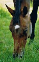 Foto 4 Pferde verschwunden