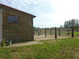 Foto 2 Pferdebox mit Paddock inkl. ganztägiger Koppelgang