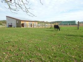 Foto 4 Pferdebox mit Paddock inkl. ganztägiger Koppelgang
