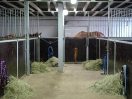 Pferdeboxen und Offenstallplätze zu vermieten