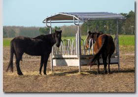 Foto 10 Pferdeboxen und Offenstallplatz frei