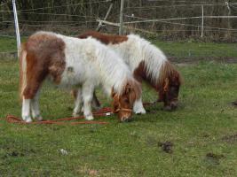 Foto 8 Pferdeboxen frei