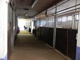 Foto 9 Pferdeboxen frei