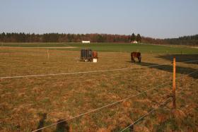 Foto 2 Pferdeboxen frei