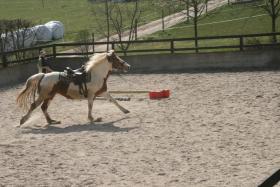 Foto 3 Pferdeboxen frei