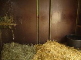 Foto 8 Pferdeboxen mit großen Paddocks in toller Natur